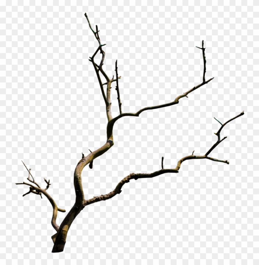 Tree Branches.