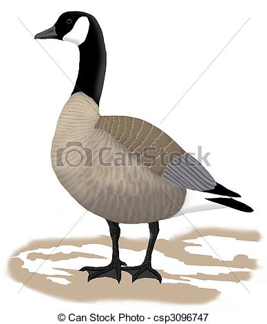 Canada goose Illustrations and Clipart. 73 Canada goose royalty.
