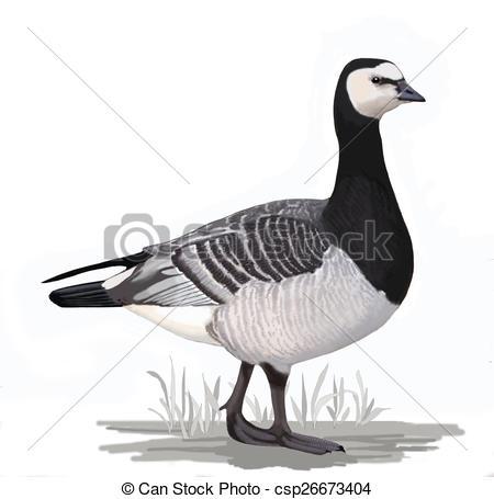 Stock Illustration of Barnacle Goose (Branta leucopsis.