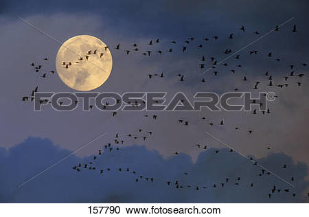 Stock Photography of full moon.