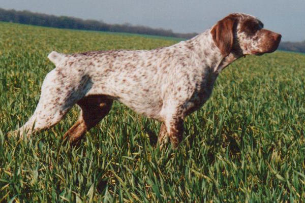 The 8 best French dog breeds.