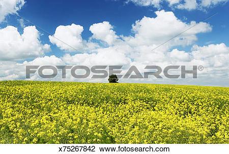 Stock Photo of Germany, Bavaria, Freising, Giggenhausen, Rape.