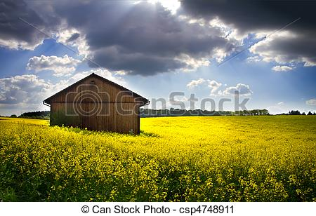 Stock Photography of Blooming rapeseed field (lat. Brassica napus.