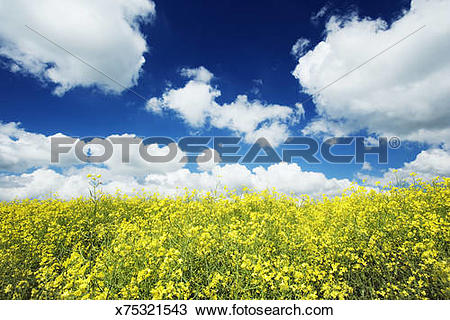 Stock Photo of Germany, Bavaria, Freising, Kranzberg, rape field.