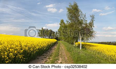 Stock Photography of Field of rapeseed (brassica napus) with rural.
