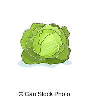 Brassica oleracea Illustrations and Clip Art. 28 Brassica oleracea.