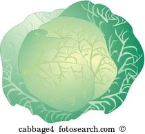 Brassica oleracea capitata Clipart and Stock Illustrations. 6.