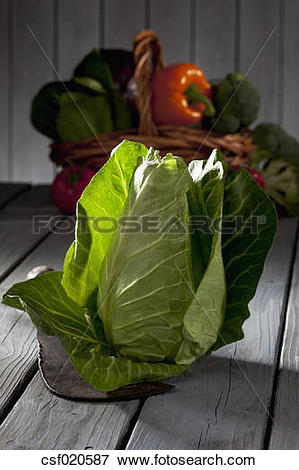 Picture of Pointed cabbage (Brassica oleracea var. capitata f.