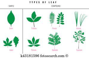 Botanica Clipart Vector Graphics. 27 botanica EPS clip art vector.