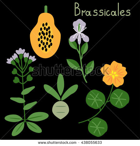 Brassicales Stock Photos, Royalty.