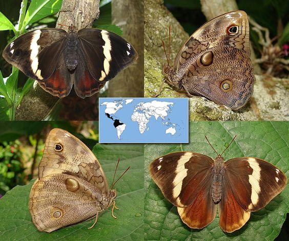 Photos, Butterflies and Families on Pinterest.