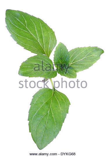 Pot Plant Above Cut Out Stock Images & Pictures.