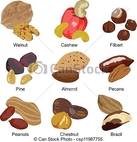 Brazil nuts Vector Clip Art Royalty Free. 132 Brazil nuts clipart.