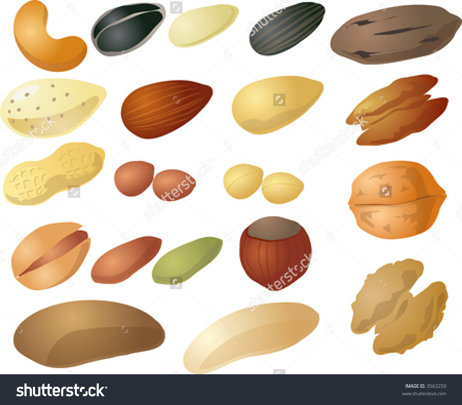 Various Nuts Seeds Isometric 3d Illustration Stock Vector 3563259.