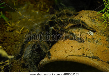 """brazilian Insect"" Stock Photos, Royalty."