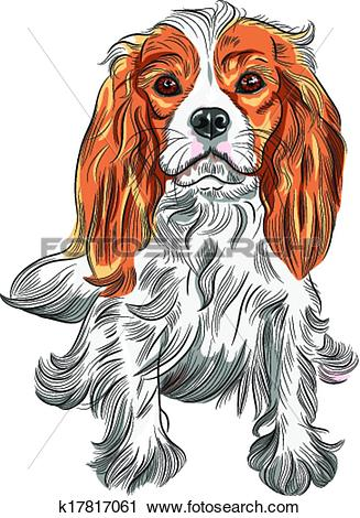 Clipart of Vector color sketch of the dog Cavalier King Charles.