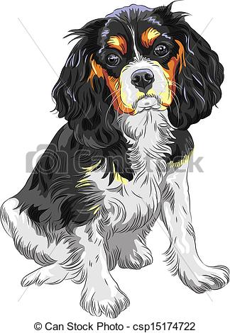 Vector Illustration of Vector color sketch of the dog Cavalier.