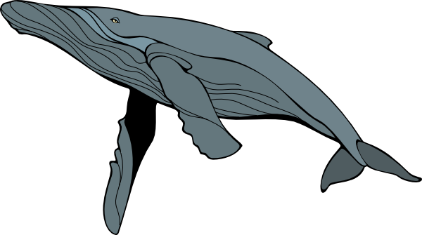 Humpback whale breaching clipart.
