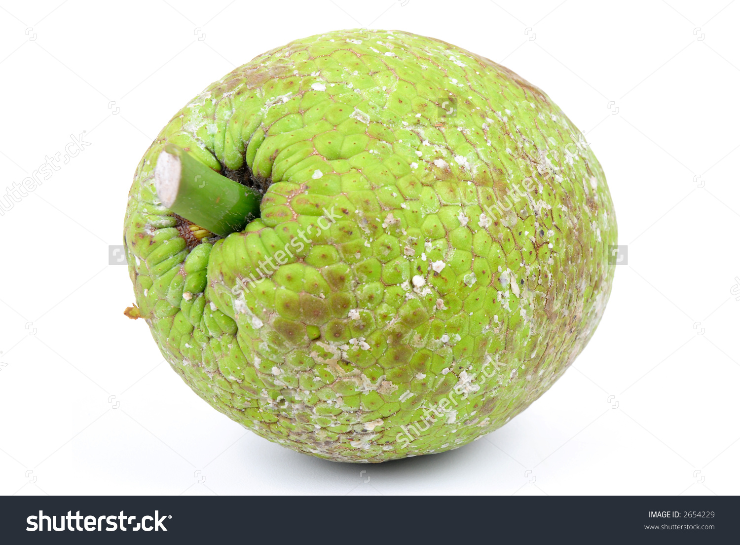 Breadfruit Artocarpus Altilis Over White Background Stock Photo.