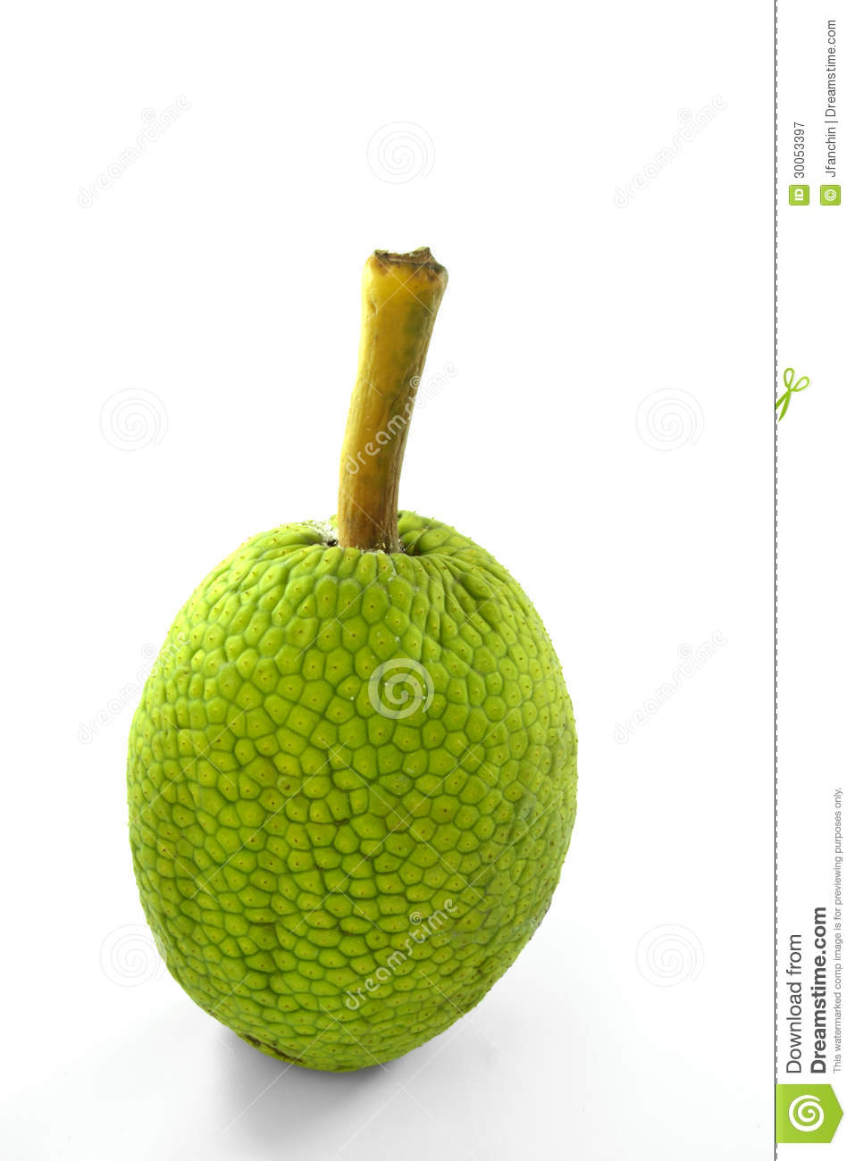 Breadfruit Royalty Free Stock Photography.