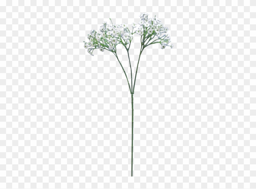Flower Png For Free Download On.
