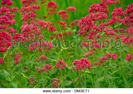 Arzneimittel Stock Photos & Arzneimittel Stock Images.