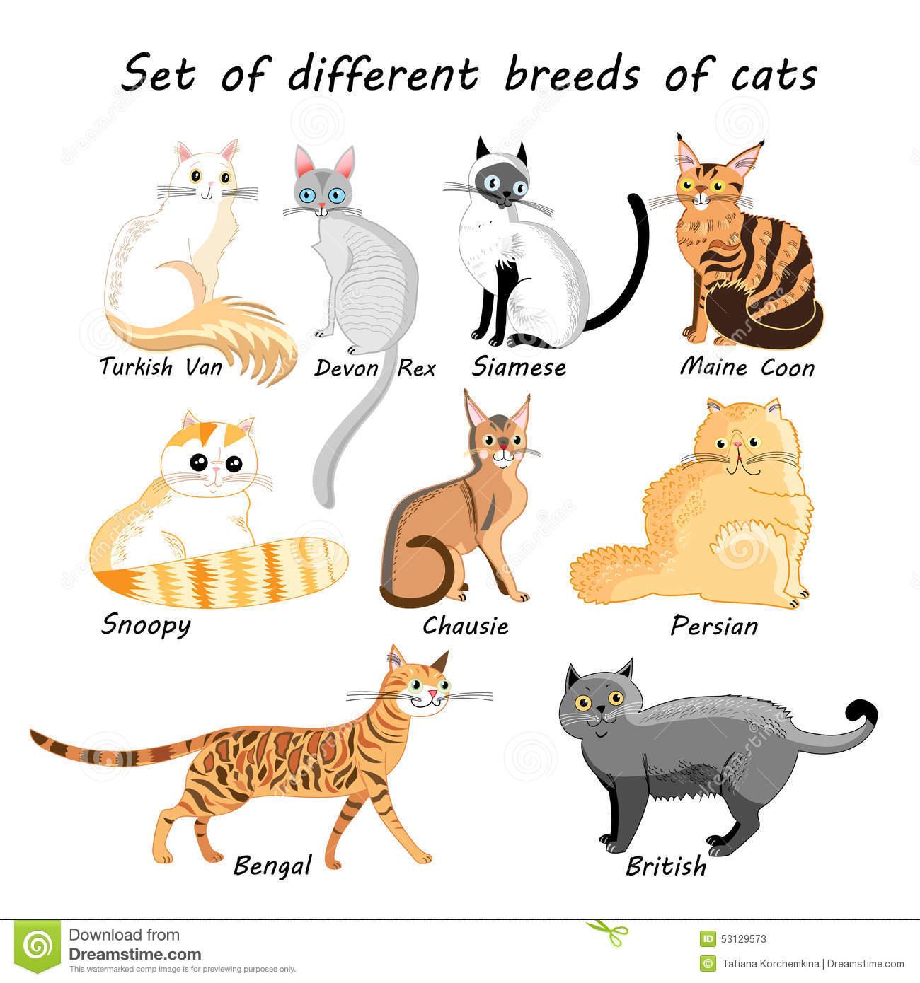 Vector Set Of Cat Breeds Stock Vector.