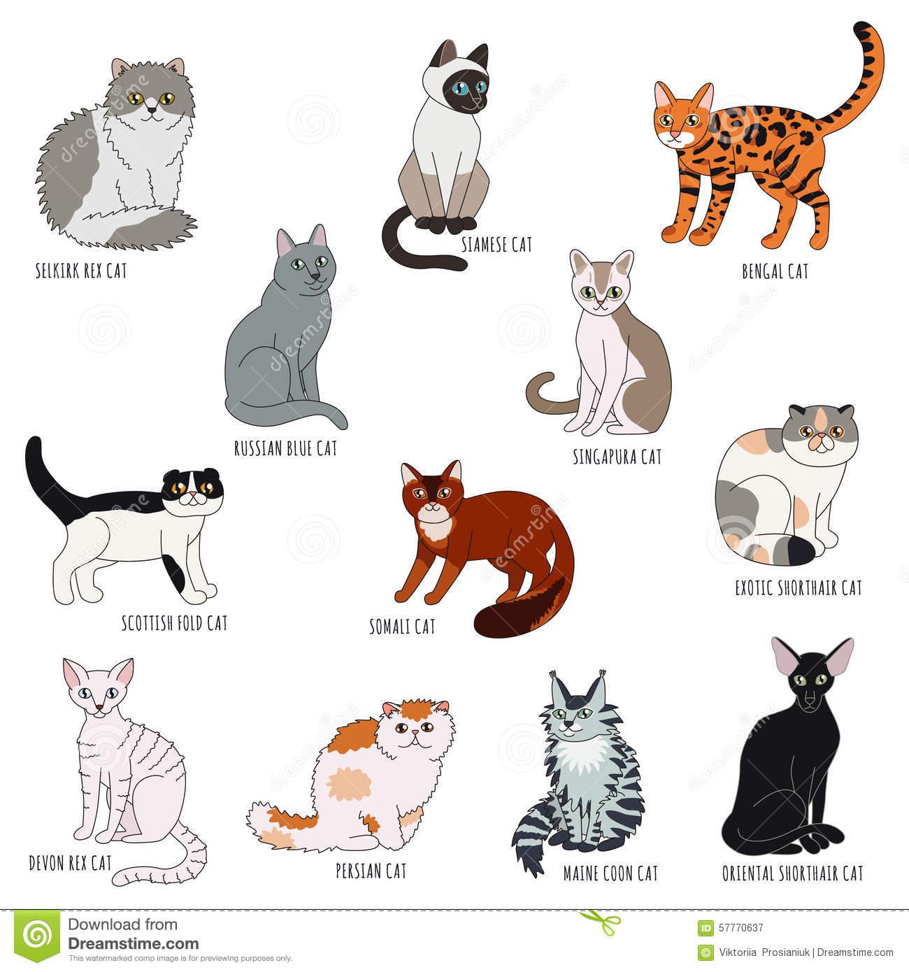 Cat Breeds!.