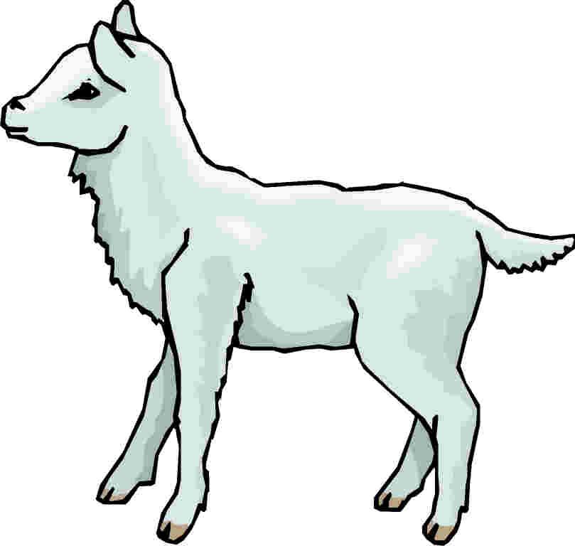 Lamb sheep clip art.
