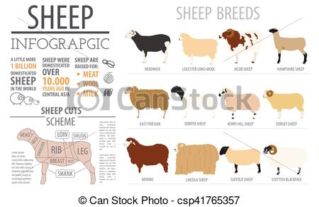 Clipart Vector of Sheep breed infographic template. Farm animal.