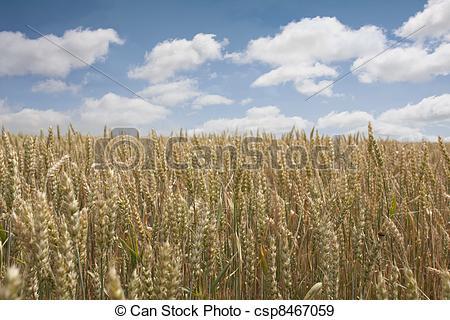 Stock Photographs of Breeding ground.