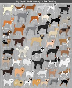 Toy Dog Breeds Clipart.