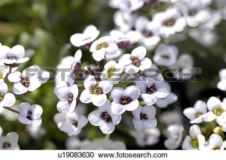 Stock Photography of blossom, plant, bloom, flowers, plants.