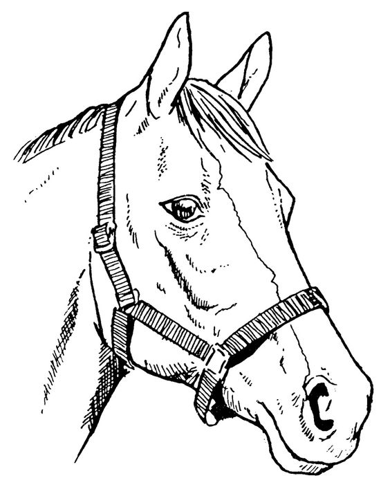 Clipart horse head with bridle.