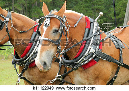 Stock Photograph of Bridled horses k11122949.