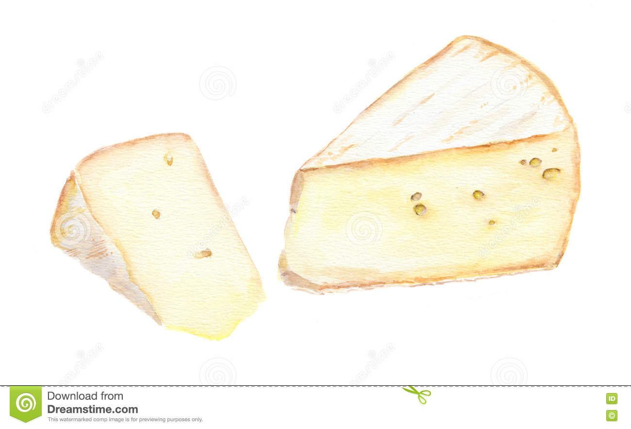 Brie Cheese Stock Illustrations.