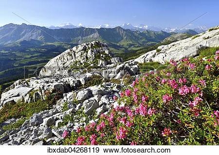 Stock Photograph of Ausblick auf Brienzer Rothorn und Berner Alpen.