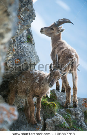 Brienzer Rothorn Stock Photos, Images, & Pictures.