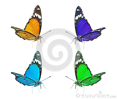 Colorful Flying Butterflies Clip Art Royalty Free Stock Images.