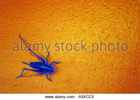 Dayglo Stock Photos & Dayglo Stock Images.