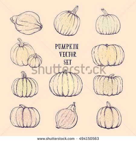 Set Pumpkin Vegetable Vector Clip Art Stock Vector 472726438.