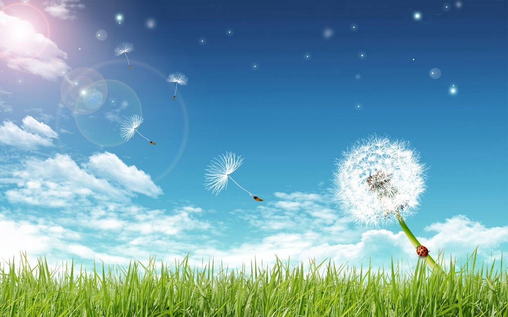 Free Grass, Blue Bright Sky And A Dandelion Backgrounds For.