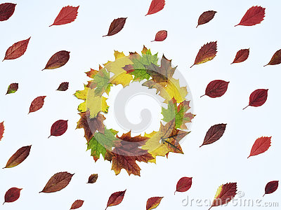 Bright Red Leaves And A Wreath Maple Leaf Stock Photo.