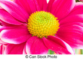 Stock Photography of Pink flower with yellow center.