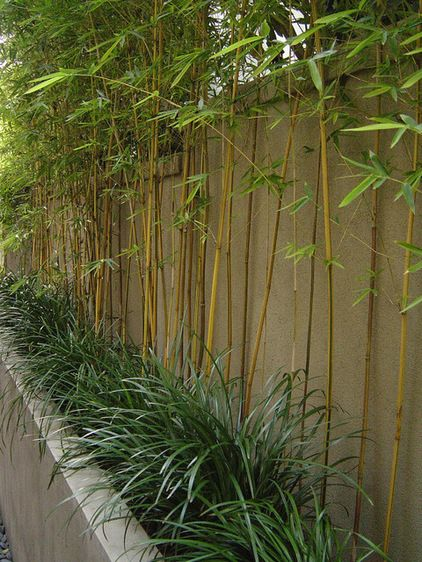 1000+ ideas about Growing Bamboo on Pinterest.