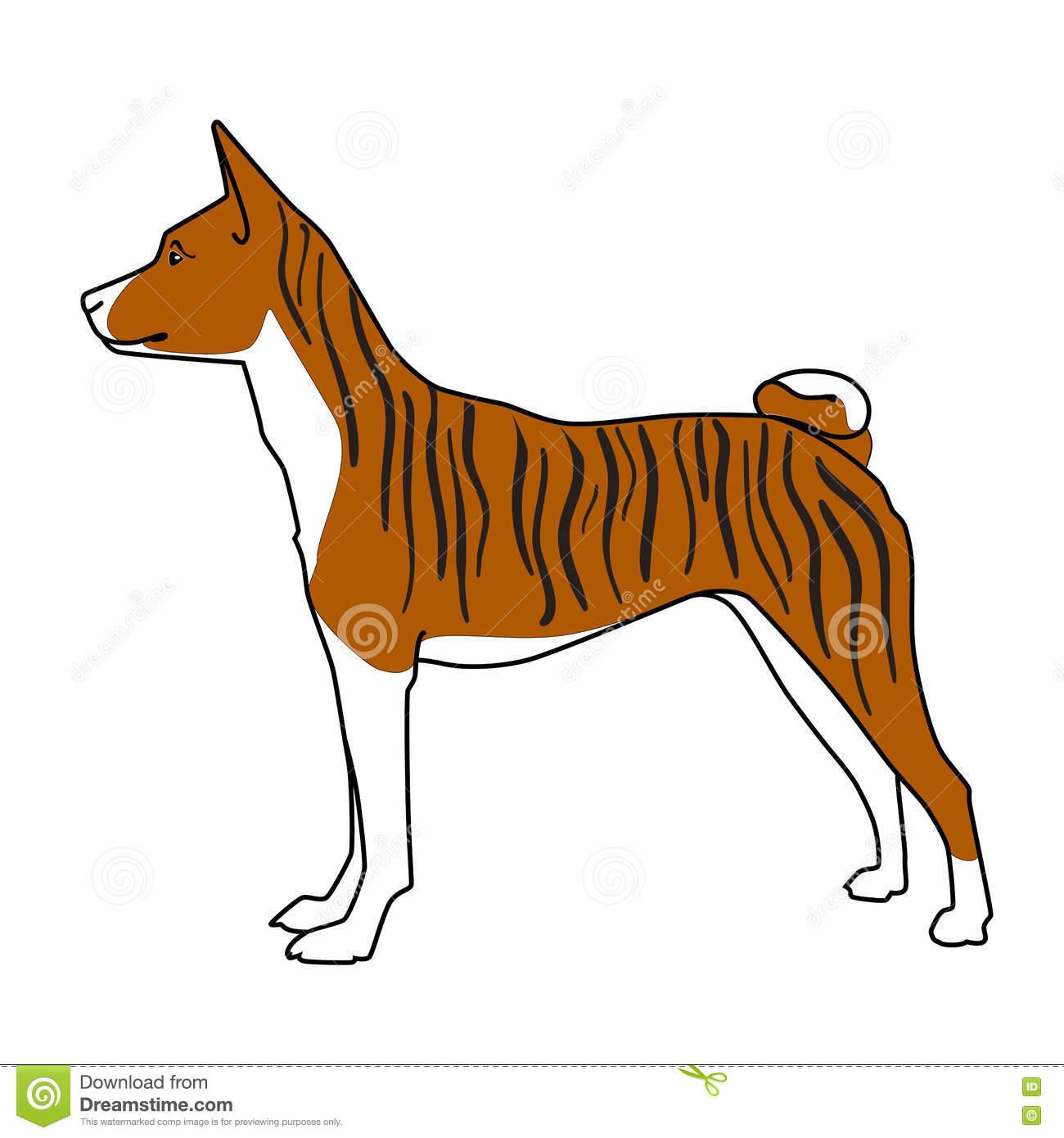Brindle Basenji Dog Standing Stock Vector.