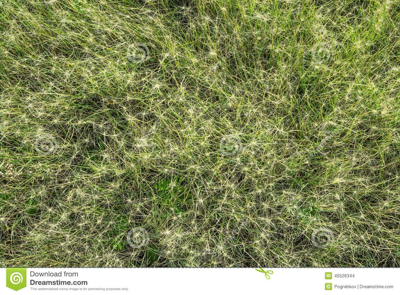 Natural Texture. Bristly Grass Stock Photo.