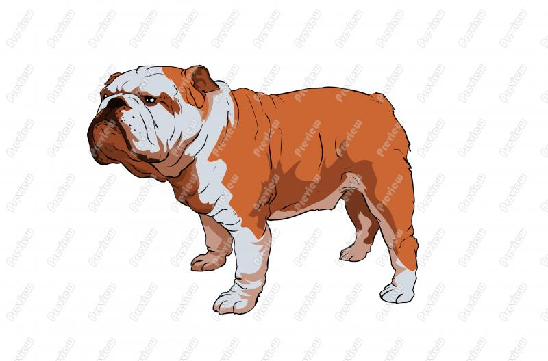 british bulldog clipart clipground