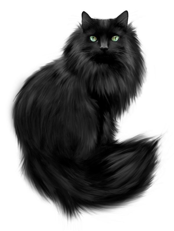 1000+ images about Cat on Pinterest.