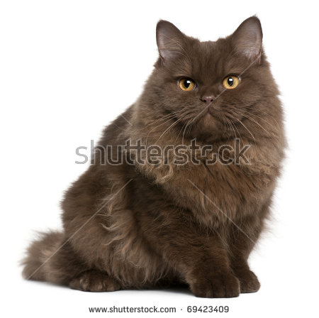 Long Haired Cat Stock Photos, Royalty.